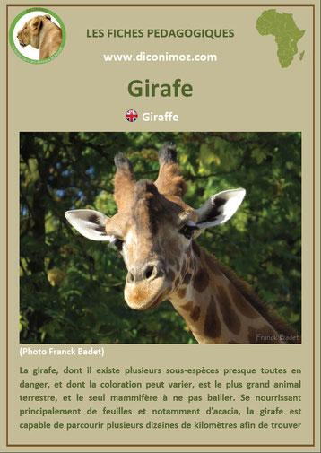 fiche animaux pdf girafe afrique imprimer telecharger