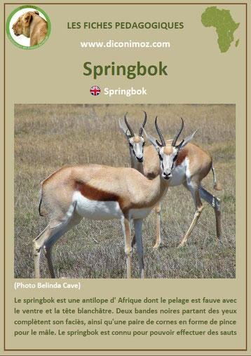 fiche animaux afrique springbok a telecharger et a imprimer