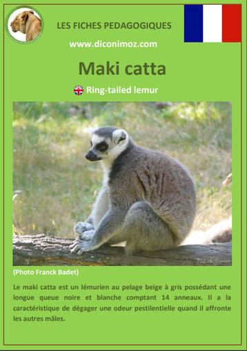 fiche animaux de madagascar pdf pedagogique maki catta a telecharger et a imprimer