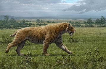 fiche animaux disparus smilodon tigre dent de sabre