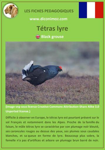 fiche animaux pédagogiques des montagnes francaises tetras lyre oiseau