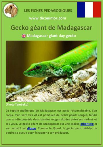 fiche animaux de madagascar pdf pedagogique gecko geant a telecharger et a imprimer