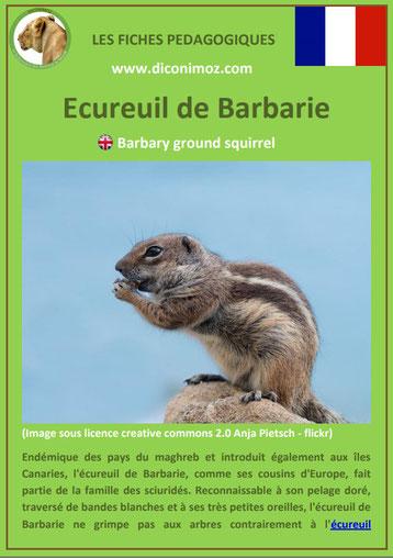 fiche animaux ecureuil de barbarie taille poids habitat longevite repartition comportement
