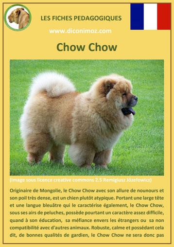 fiche identite chien race chow chow origine caractere comportement poil sante