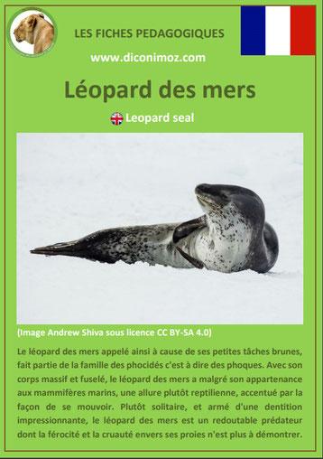 fiche animaux pedagogiques mammiferes marins pdf leopard des mers a telecharger et a imprimer