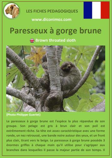fiche animaux amazonie pdf pedagogique paresseux a gorge brune a telecharger et a imprimer