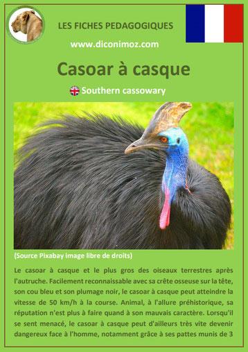 fiche animaux pdf australie casoar a casque a telecharger et a imprimer