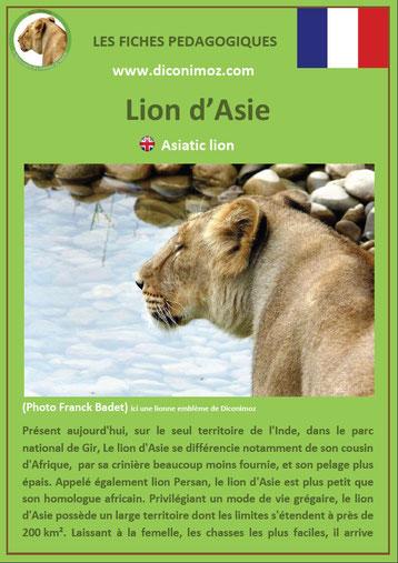 fiches animaux pdf pedgogique felins lion asie a telecharger et imprimer