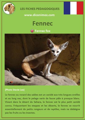 fiche animaux pdf canides fennec a telecharger et a imprimer