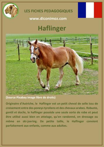 fiche cheval chevaux haflinger origine caractere comportement robe race