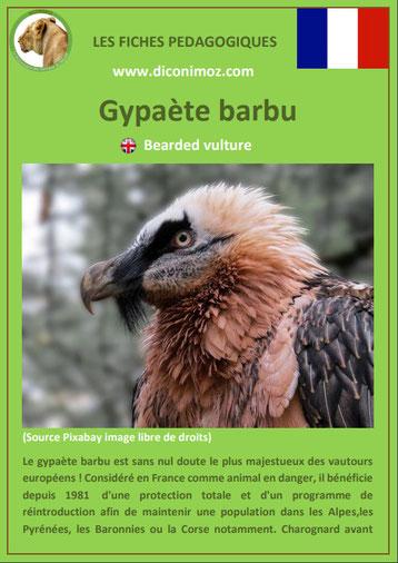fiche animaux pdf rapaces gypaete barbu  a telecharger et a imprimer