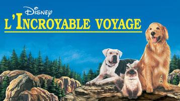 film l'incroyable voyage de walt disney avec chien golden retriever