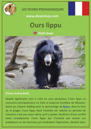 fiche animaux pdf ours lippu ursides
