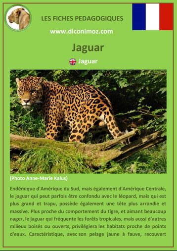 fiches animaux pdf pedgogique felins jaguar a telecharger et imprimer