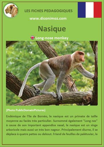 fiche animaux pdf singe nasique a telecharger et a imprimer