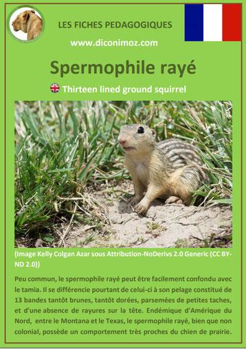 fiche animaux spermophile raye taille poids habitat longevite repartition comportement
