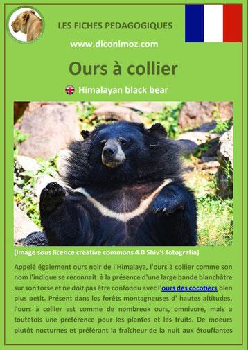 fiche animaux pdf ours a collier a telecharger et a imprimer