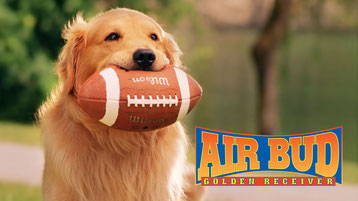 affiche du film air bud avec chien golden retriever