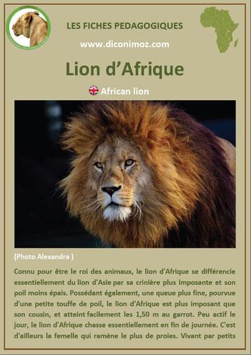 fiche animaux pdf afrique lion à telecharger et a imprimer