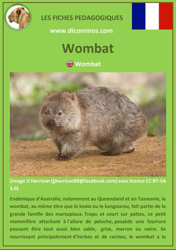 fiche animaux pdf australie wombat a telecharger et a imprimer