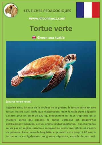 fiche animaux reptile pdf tortue verte à telecharger et a imprimer
