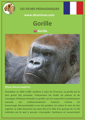fiche animaux pdf singe gorille a telecharger et a imprimer
