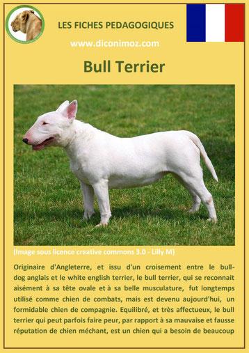 fiche identite chien race bull terrier origine caractere comportement poil sante