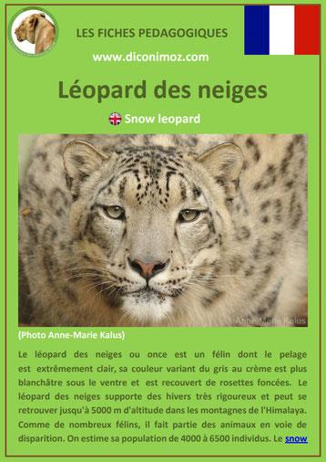 fiches animaux pdf pedgogique felins leopard des neiges a telecharger