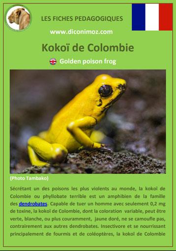 fiches animaux d'amazonie pdf kokoi de colombie comportement taille poids habitat reproduction alimentation
