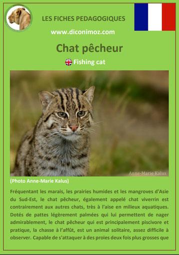 fiches animaux pdf pedgogique felins chat pêcheur a telecharger