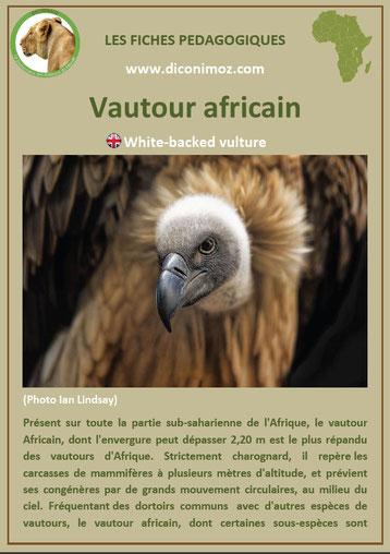 fiche animaux afrique vautour a telecharger et a imprimer