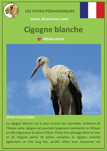 fiche animaux oiseaux pedagogiques cigogne blanche alsace a telecharger et a imprimer