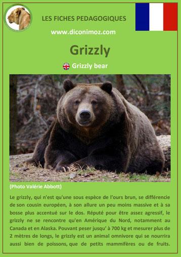 fiche animaux pdf ours grizzly a telecharger et a imprimer