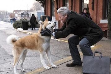 image du film hatchi avec richard gere et un chien de race akita inu