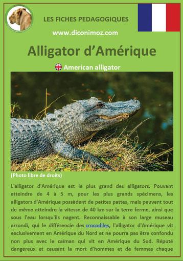 fiche animaux reptile pdf alligator à telecharger et a imprimer
