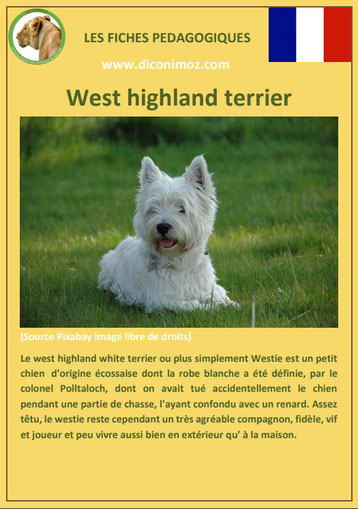 fiche chien pdf race westie west highland terrier comportement origine caractere soin poil