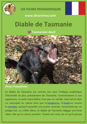 fiche animaux australie pdf diable de tasmanie a telecharger et a imprimer