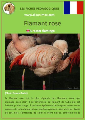 fiche animaux pdf oiseaux flamant rose à telecharger et a imprimer