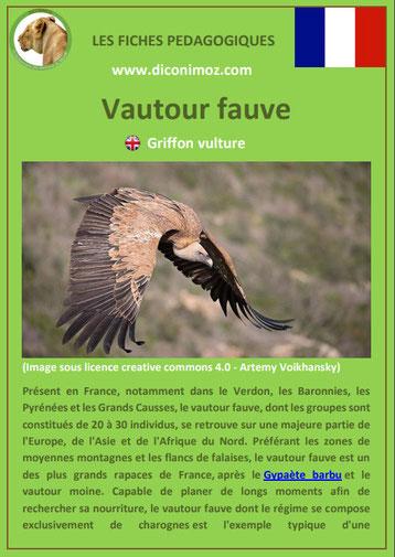 fiche animaux pdf rapaces vautour fauve a telecharger et a imprimer