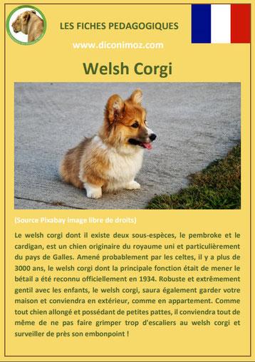 fiche chien pdf race welsh corgi comportement origine caractere soin poil