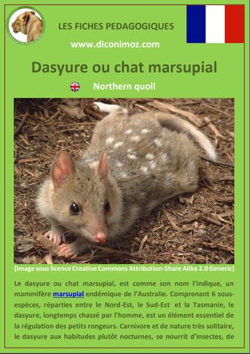 fiche animaux pdf australie dasyure chat marsupial a telecharger et a imprimer