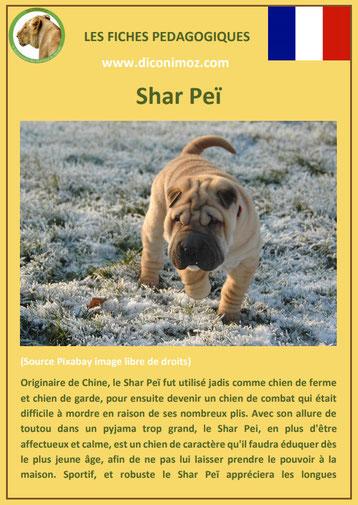 fiche chien pdf race shar pei comportement origine caractere soin poil