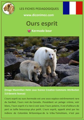 fiche animaux pdf ours esprit a telecharger et a imprimer