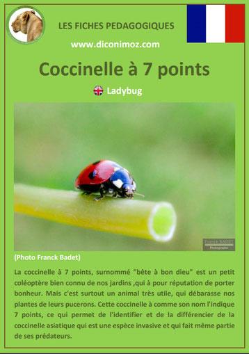 fiche animaux pdf insecte coccinelle a 7 points à telecharger et a imprimer
