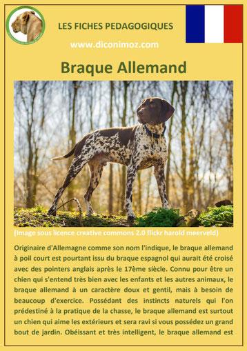 fiche chien pdf race braque allemand comportement origine caractere soin poil