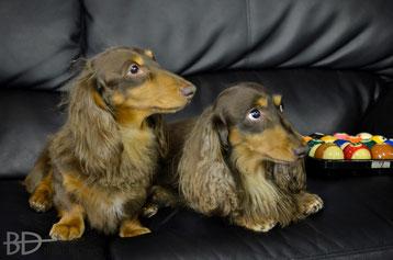 看板犬は2匹いた! 淡路のミント(左)&ロッキー(右)