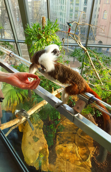 Hand feeding monkeys at the Aqua Terra Zoo