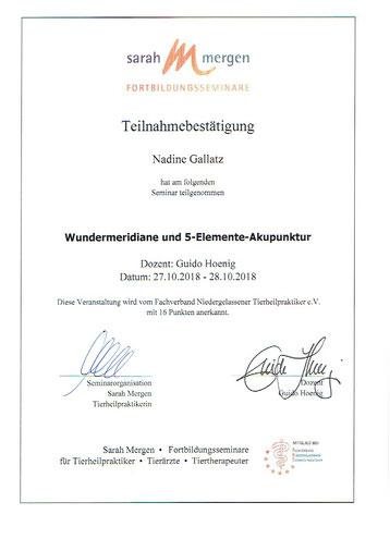 Akupunktur Fortbildung Nadine Gallatz