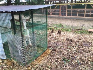 メイの小屋は鳥小屋の裏にお引越し。