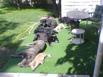 Unsere Meute vor einigen Jahren beim Sonnenbaden.